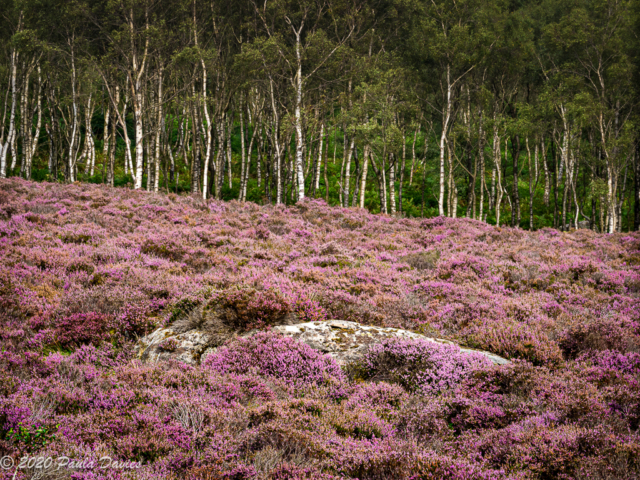 Rock-in-the-Heather