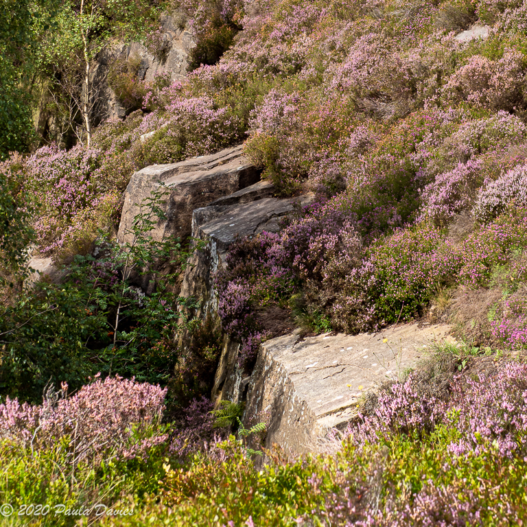 Rocks-and-Heather